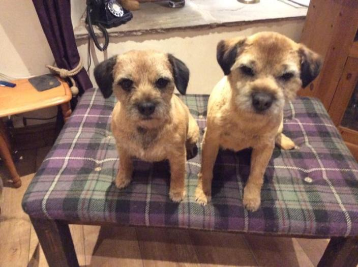 The Terriers